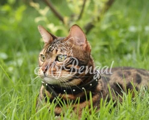 Costipazione intestinale nel gatto: sintomi e rimedi