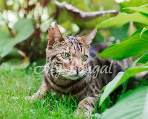Perchè i gatti mangiano l'erba